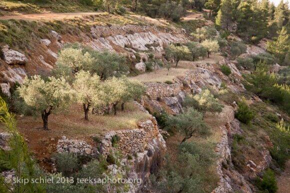 The Terraces of Battir, May 2013 (Photo: Skip Schiel)