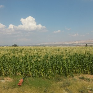 Cornfield in the Jordan River Valley (Photo:  Rodrigo Rodriguez)