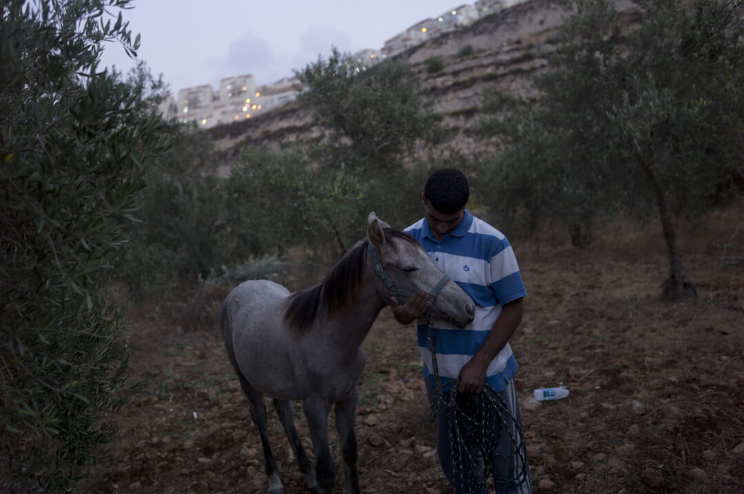 Mohamed al-Hroub cares for his horse in a small olive grove that belongs to his family in Wadi Fukin. The agricultural village of Wadi Fukin was told just after the Gaza War that Israel intends to seize the majority of its farmland that lies in Area C. (Photo: Andrew Lichtenstein)
