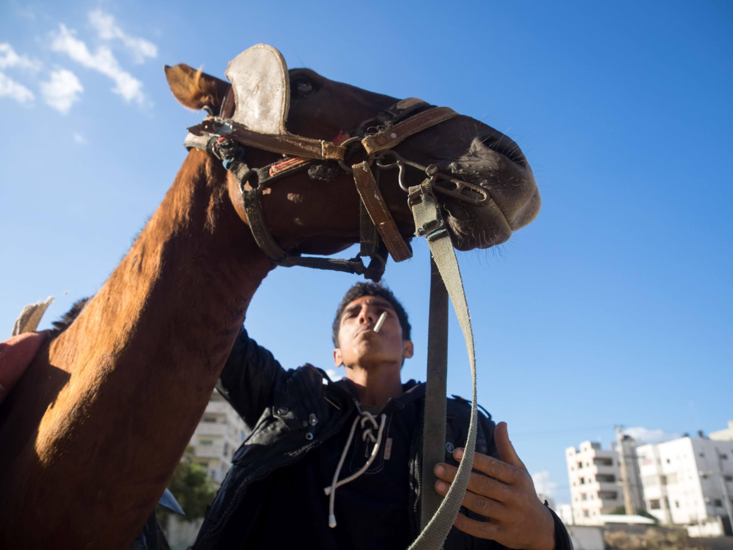 Yusef Abu Kader, 18, prepares his horse to cart the day's haul of rebar. (Photo: Dan Cohen)
