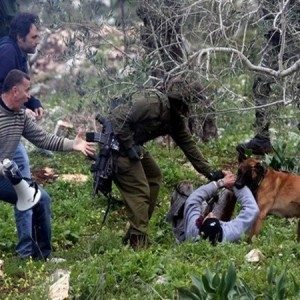 Dog locks onto boy's arm in Qufer Qaddoum protestn in Palestine 2012, photo by the Popular Struggle Coordination Committee