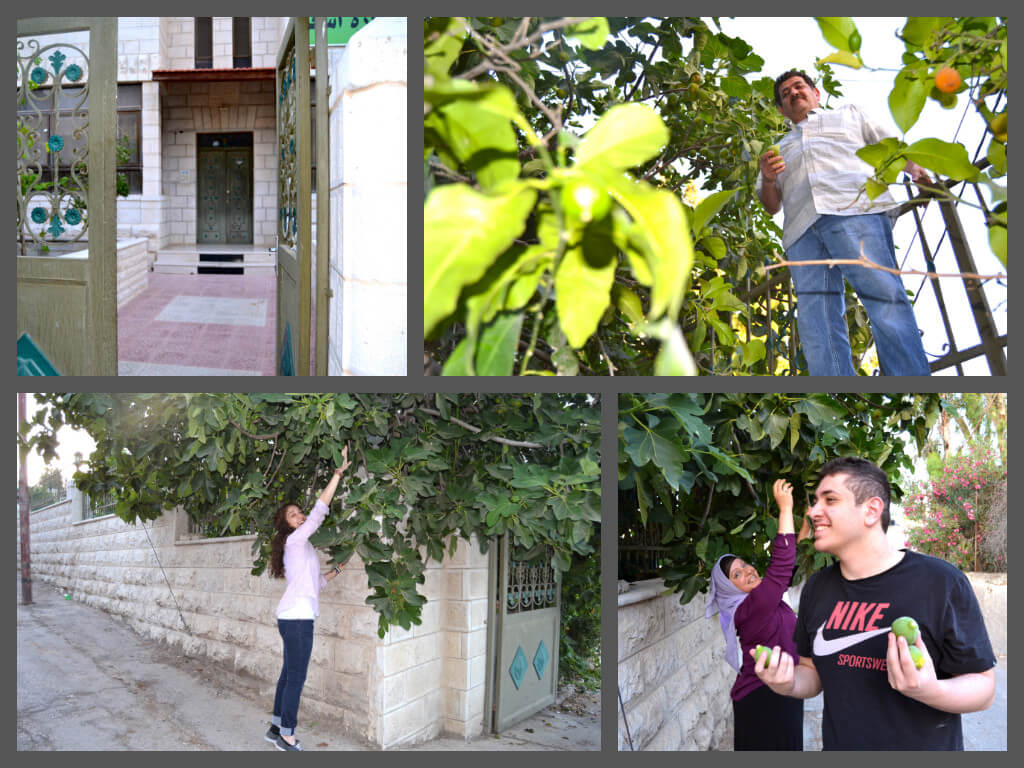 After my family home was built in Beit Hanina in 1963, the first thing my father (top right) and grandparents did was plant fig and olive trees in the yard — their roots are still growing, large branches towering over our home and supplying us with fresh green figs and olives today. Also pictured (bottom right): my mother, Summaya; and my younger brother, Hamza. (Photo: Samah Assad)