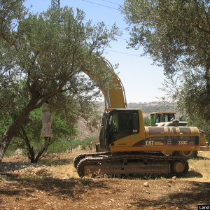 An Israeli jack hammer starting to destroy Palestinian olive trees in Beit Hanina, 2008. (Photo: POICA)