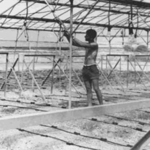 Drip irrigation in Israeli kibbutz, 1967, from Netafim