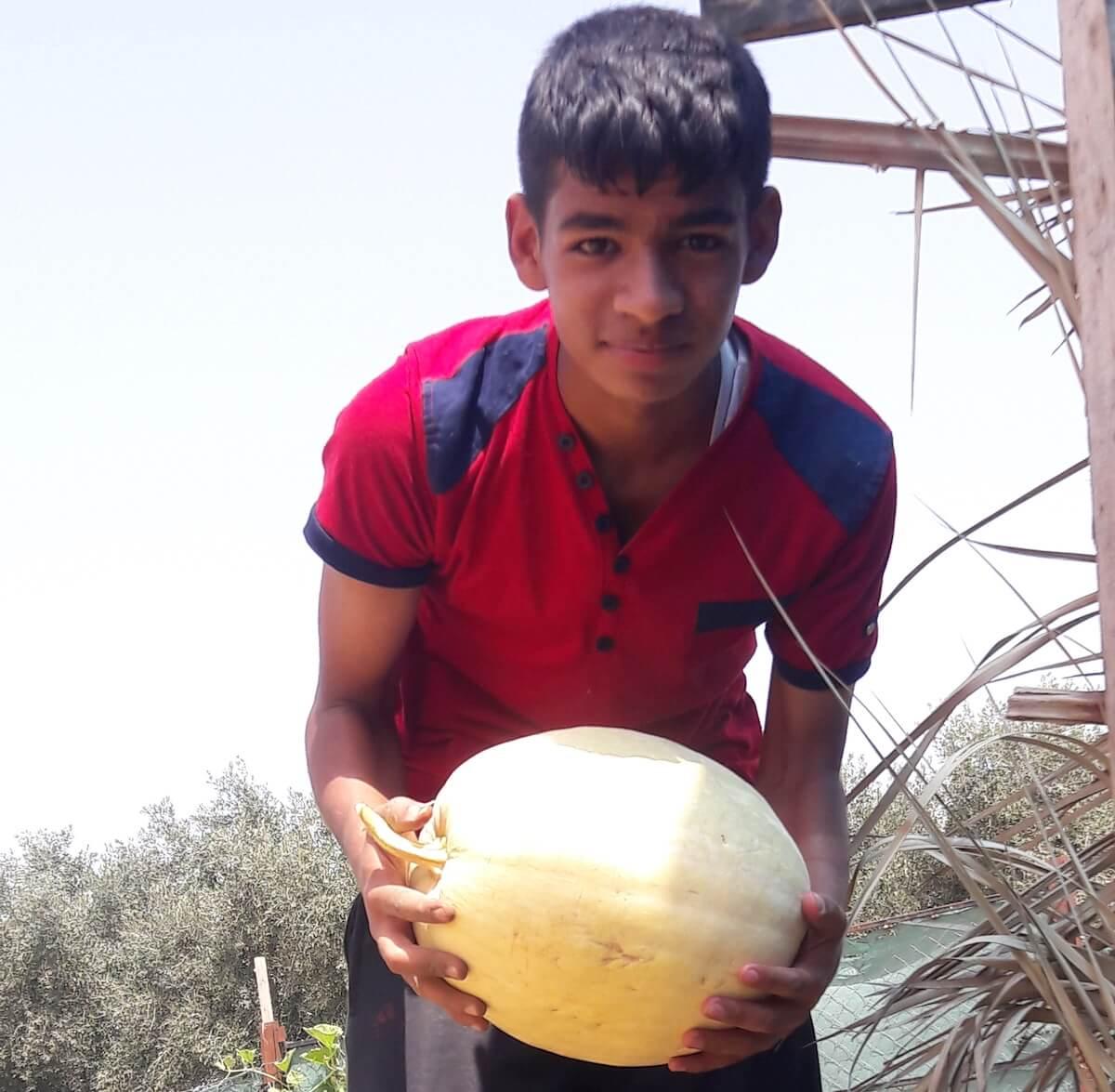Kareem Kafarna in his family grove in Beit Hanoun. (Photo: Isra Saleh El-Namy)