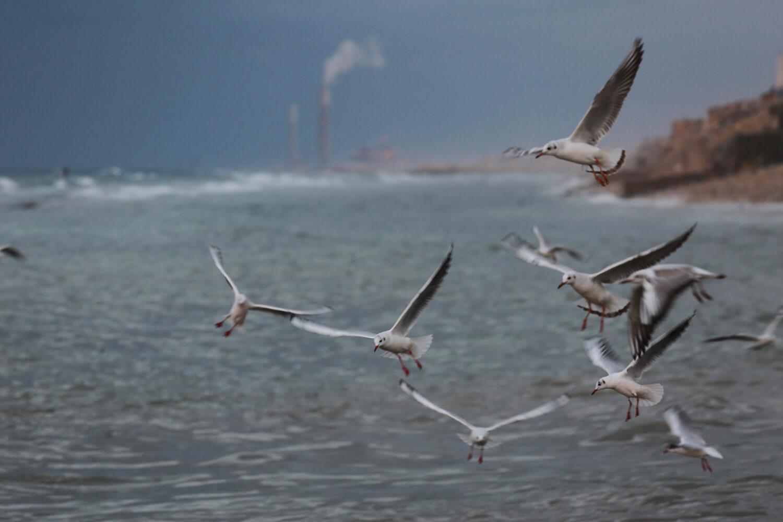 Seagulls off the coast of Gaza (Photo: Mohammed Asad)