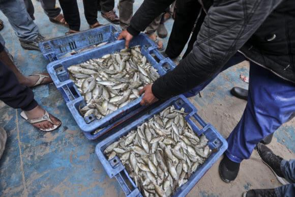 Gaza fish market. (Photo: Mohammed Assad)
