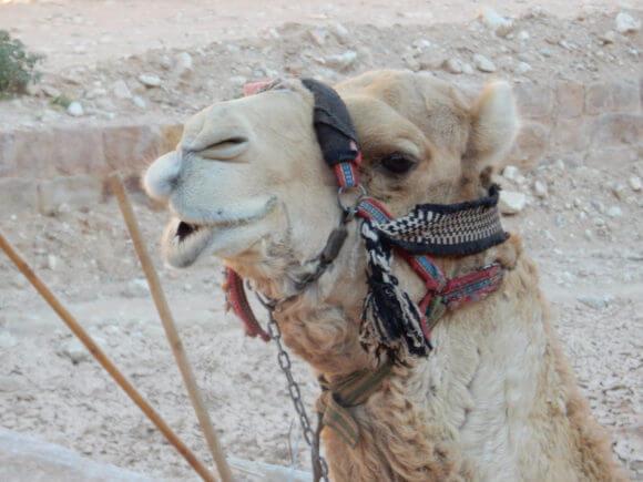Petra, Jordan. (Photo: Alice Rothchild)