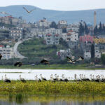 White stork birds flying in the West Bank city of Jenin, on March 13, 2019. According to the recent IPBES Global Assessment, close to 20 percent of all bird species on Earth are at threat of extinction. (Photo: Shadi Jarar'ah/APA Images)