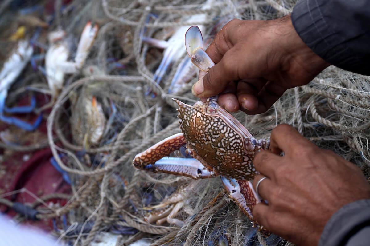 A Palestinian fisherman takes a crab out of his net at the beach of Gaza City, on Oct. 23, 2013. According to the recent IPBES Global Assessment, close to 30 percent of all crustacean species on Earth are at threat of extinction. (Photo: Mohammed Asad/APA Images)