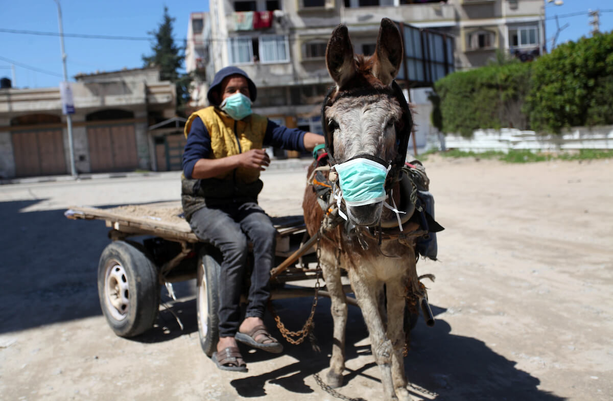 A Palestinian man wearing a protective face mask rides a donkey cart in Gaza City early on March 22, 2020. (Photo: Mahmoud Ajjour/APA Images)