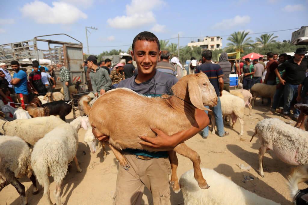 Palestinians gather at a livestock market ahead of Eid al-Adha in Deir al-Balah in the center of the Gaza Strip on July 28, 2020. (Photo: Ashraf Amra/APA Images)