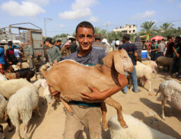 Palestinians gather at a livestock market ahead of Eid al-Adha in Deir al-Balah in the center of the Gaza Strip on July 28, 2020. (Photo: Ashraf Amra/APA Images)