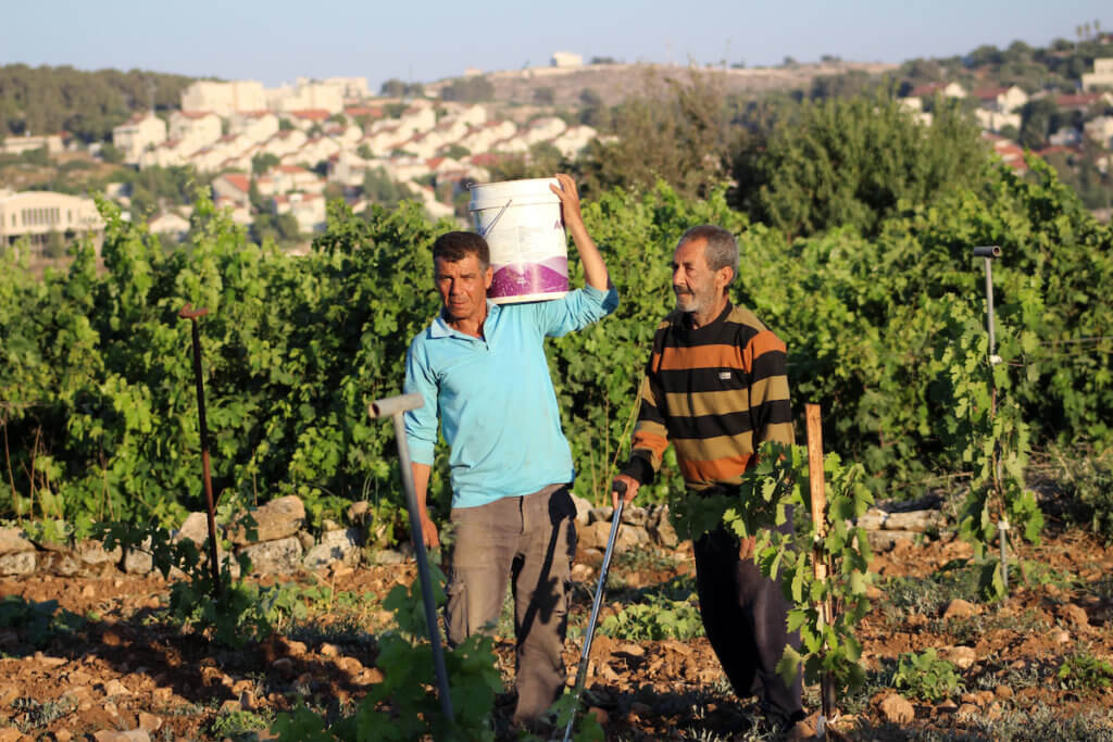 Palestinian work fields near the Israeli settlement of Efrat in the Gush Etzion settlement bloc between Hebron and Bethlehem in the West Bank on June 30, 2020. Israel aims to begin a process of annexing West Bank settlements and the Jordan Valley. (Photo: Mosab Shawer/APA Images)